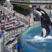 SeaWorld stoppt Shows mit Orca-Walen
