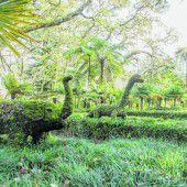 Botanischer Garten im schönen Furnas-Tal