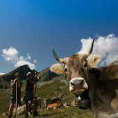 Angst wegen TBC auf unseren Alpen