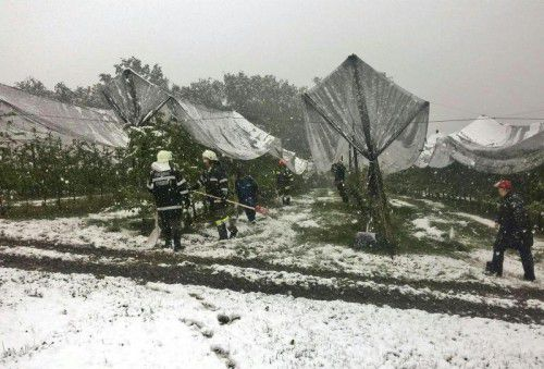 Der schwere Schnee drohte, die Netze, die die Obstbäume vor Hagel schützen sollen, einzudrücken.