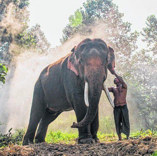 Elefanten sind in Kambodscha immer noch Nutztiere.