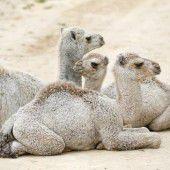 Pause in der prallen Wüstensonne