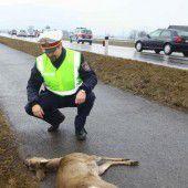 ÖAMTC warnt vor vermehrten Unfällen mit Wild im Frühjahr