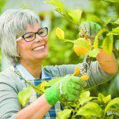 Frühjahrspflege für Zitruspflanzen