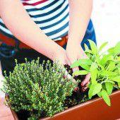Freude mit dem eigenen kleinen Kräutergarten