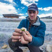 Vorarlbergs Obstbauern erhalten 900.000 Euro, um Frostschäden abzufedern A5