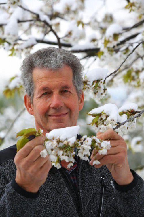 Schnee statt wärmender Sonnenstrahlen für die Kriasi-Blüte in Fraxern. Julius Mittelberger bangt um die Ernte.
