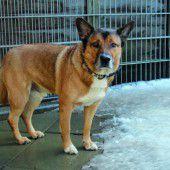Besitzer gesucht mit Hundeerfahrung