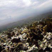 WWF sieht Unesco-Weltnaturerbe in Gefahr