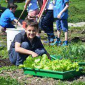 Gartenpiraten entern weitere Beete in Bezau