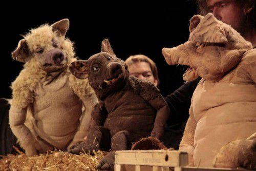 Die drei Schweine haben es saugut. Jeden Tag sitzen sie im Stroh, spielen Verstecken, und jeder ist dabei gern mal der böse Wolf.