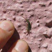 inatura sucht bislang unbekannte Insektenart