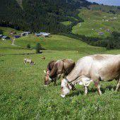 Landwirtschaftliche Bodenkultur in Vorarlberg
