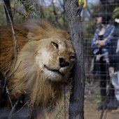 Zirkustiere wieder zurück in Afrika