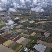 Tulpenblüte in den Niederlanden