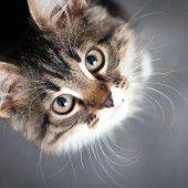 Schmeichler sind (wia) Katza: vorna schleacka, hinta kratza.