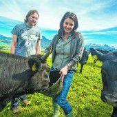 Japanische Rinder grasen jetzt auch auf Wälder Wiesen