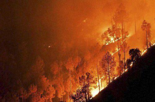 In Indien kommt es durch die hohen Temperaturen und die Dürre öfters zu verheerenden Waldbränden.