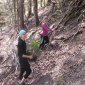 BORG-Schüler setzten 1800 Forstpflanzen
