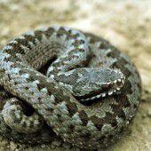 Schlangenbiss: Bub kollabiert