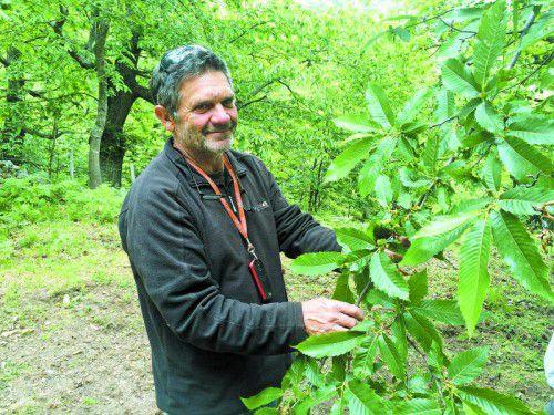 Antonio Poli ist stolz auf seine Kastanienbäume, die er hegt und pflegt.