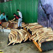 Singapur vernichtet acht Tonnen Elfenbein
