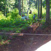 Waschbären im Wildpark bekommen neues Zuhause