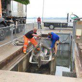Stadt Bregenz installiert zur Vorsicht Hochwasserpumpen am Bodensee