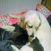Hund und Katz können auch gut miteinander
