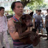 Proteste begleiten das Hundefleisch-Festival