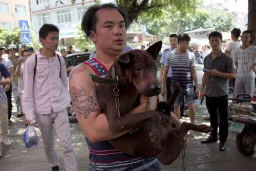 Ein Tierschützer trägt einen Hund, den er einem Händler in Yulin abgekauft und so vor dem Tod bewahrt hat.