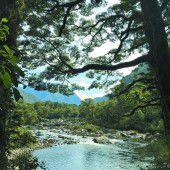 Flora und Fauna bieten Blick in Vergangenheit