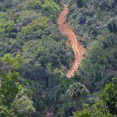 Amazonas-Regenwald droht riesiger Waldverlust