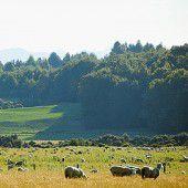 Sechs Schafe pro Einwohner