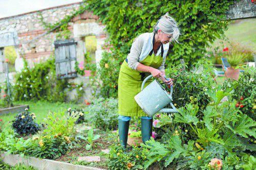 Um Schäden an Blättern und Blüten zu vermeiden, empfiehlt es sich, möglichst bodennah zu gießen.