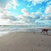 Entspannter Urlaub mit dem Hund am Meer