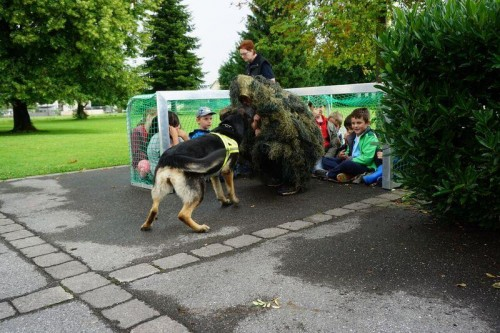 Bewunderung und Spaß bei den Höchster Volksschülern bei Vorführungen der Rettungshunde des ÖRD Mäder.