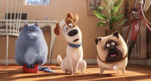 """Der Animationsfilm """"Pets"""" klärt in witziger Art und Weise über das geheime Leben der Haustiere auf."""