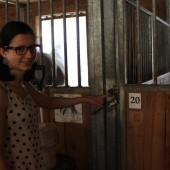 Stute Vanina gestohlen und in einen fremden Stall gesperrt