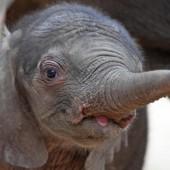 Neuer Star im Zoo in Halle