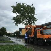 Drei 30-Meter-Linden in Dornbirn versetzt