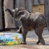 Elefantenbaby hat einen Namen