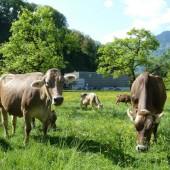 Landwirte schützen Natur und Klima