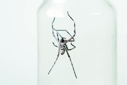 Nützlinge wie Spinnen sollten behutsam umgesiedelt werden. Foto: Shutterstock