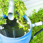 Mit dem Regenwassertank Geld und Trinkwasser sparen