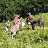 Junge Sommerfrischler auf der Alpe Agtenwald