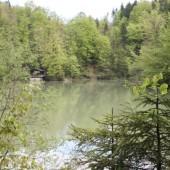 Rettung des Staufensees beginnt