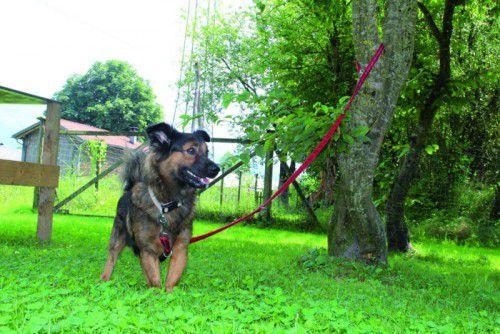 Die Hunde Tamino (l. o.) und Coco (l. u.), Katzendame Baza (r. u.) sowie die Ratten Mila und Melody (r. o.) wünschen sich ein neues Zuhause.