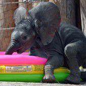 Elefantenbaby getauft