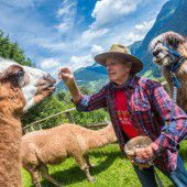 Auf Wandertour mit Lamas